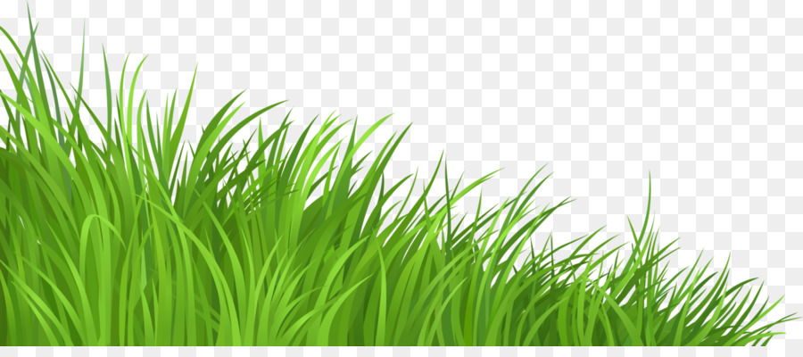 Lawn clip art png. Clipart grass