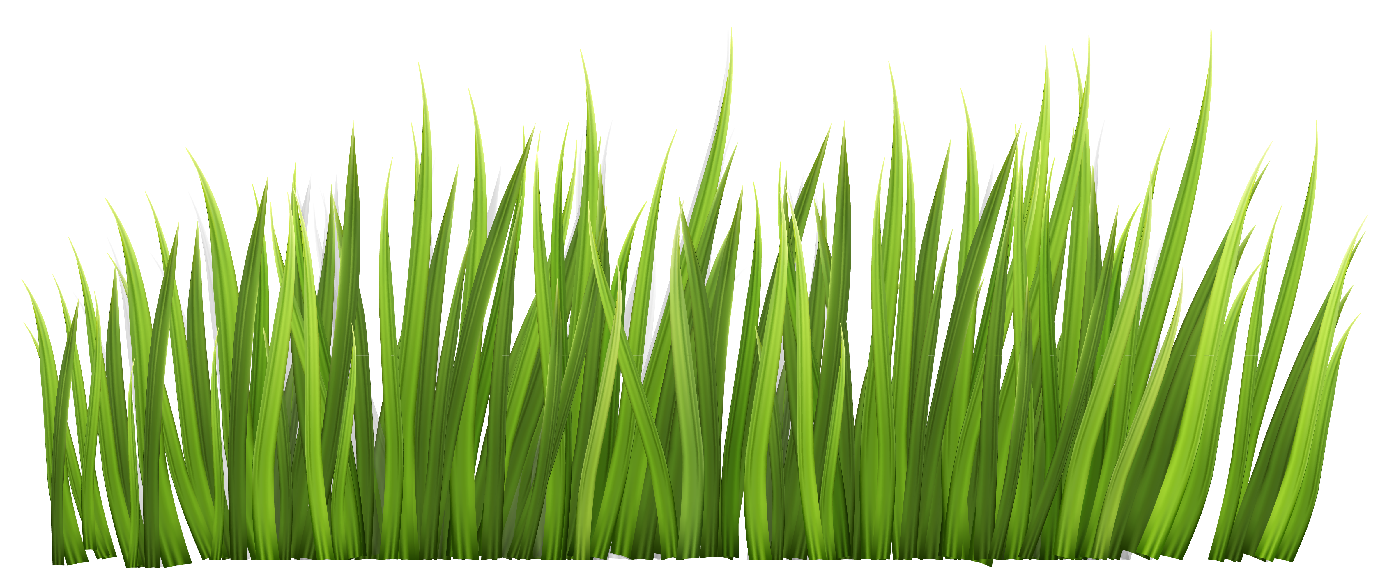 Grass decor png picture. Clipart rock vector