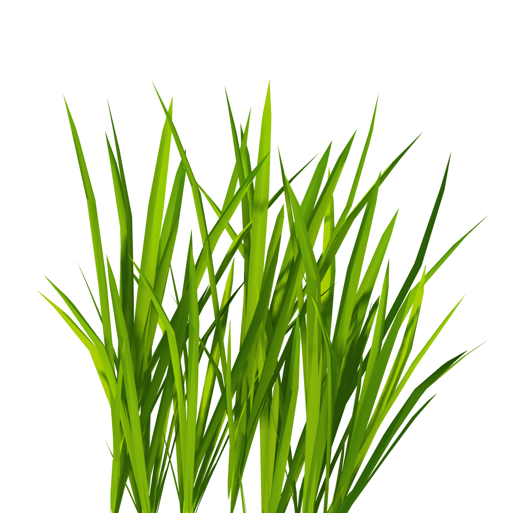 Clipart grass bermuda grass. Free download with trendy