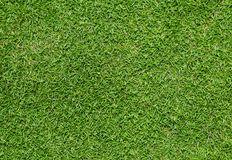 Clipart grass bermuda grass. Portal