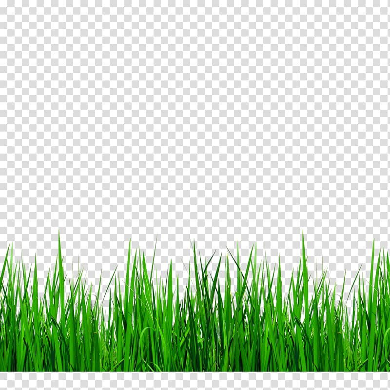 Clipart grass boarder. Green illustration grasses border