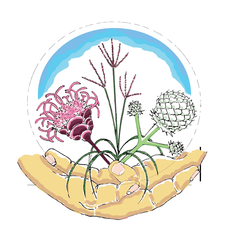 Clipart grass buffalo grass. Sustainable landscape design architecture