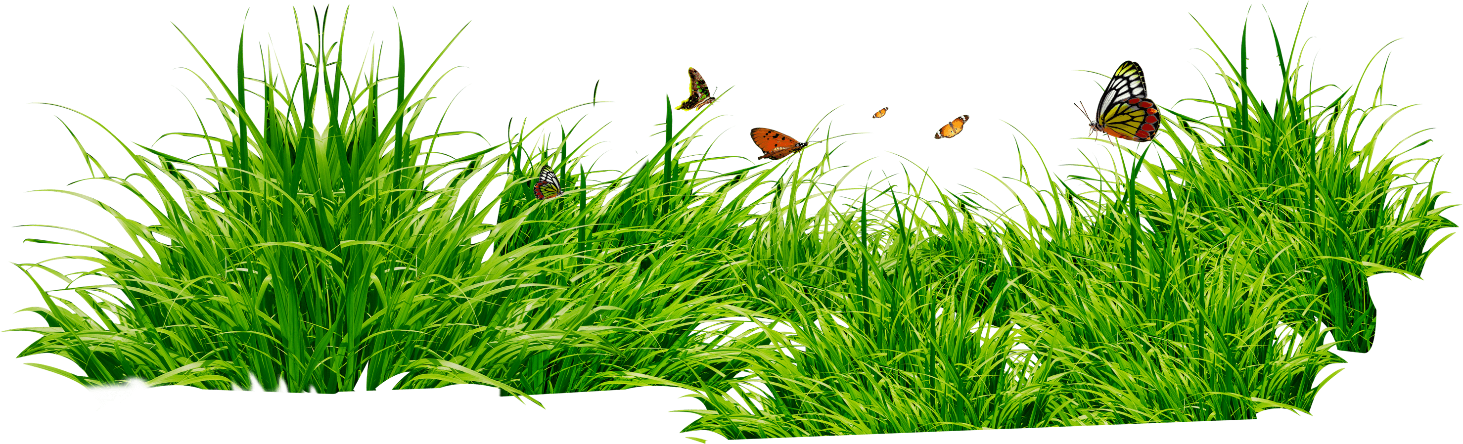 Clipart grass buffalo grass. Patch with insects png