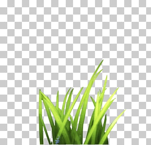 Clipart grass bunch.  png cliparts for