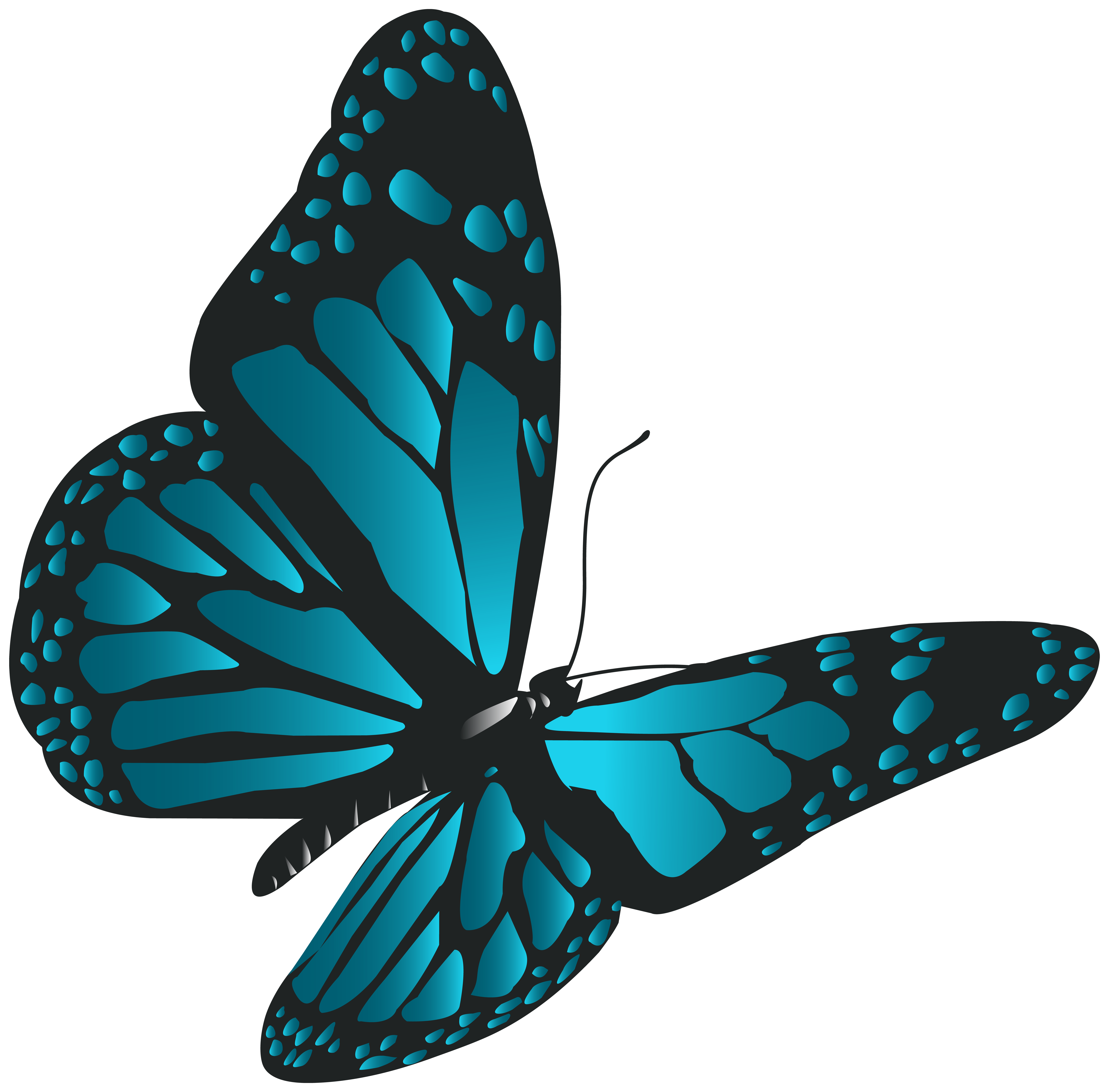 Butterfly png images. Blue clip art gallery