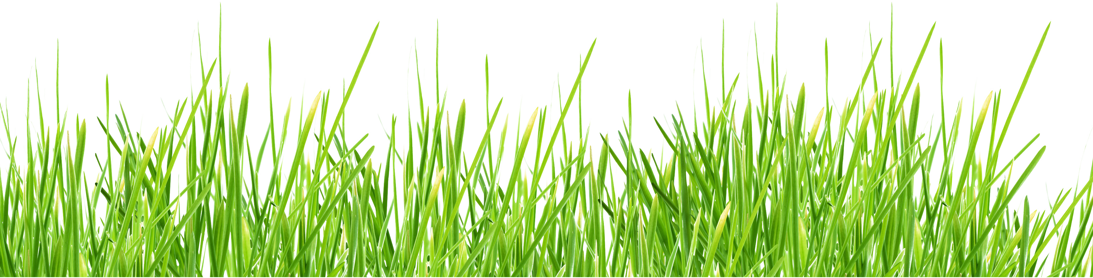 collection of nature. Grass vector png
