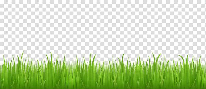 Clipart grass clear background. Green illustration lawn desktop