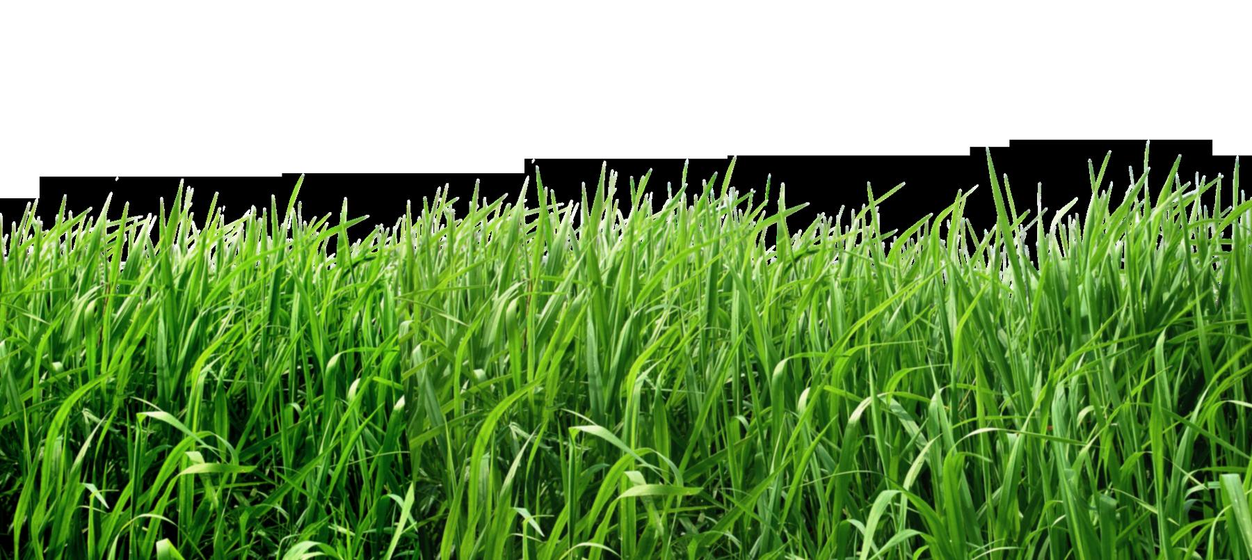 Grass Clipart Crop Grass Crop Transparent Free For Download On Webstockreview 2021