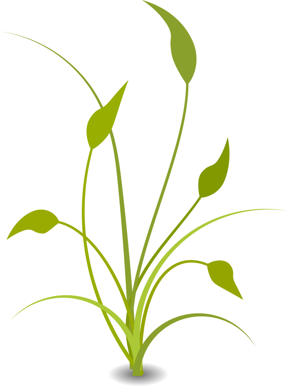 Green plant free stock. Crops clipart illustration