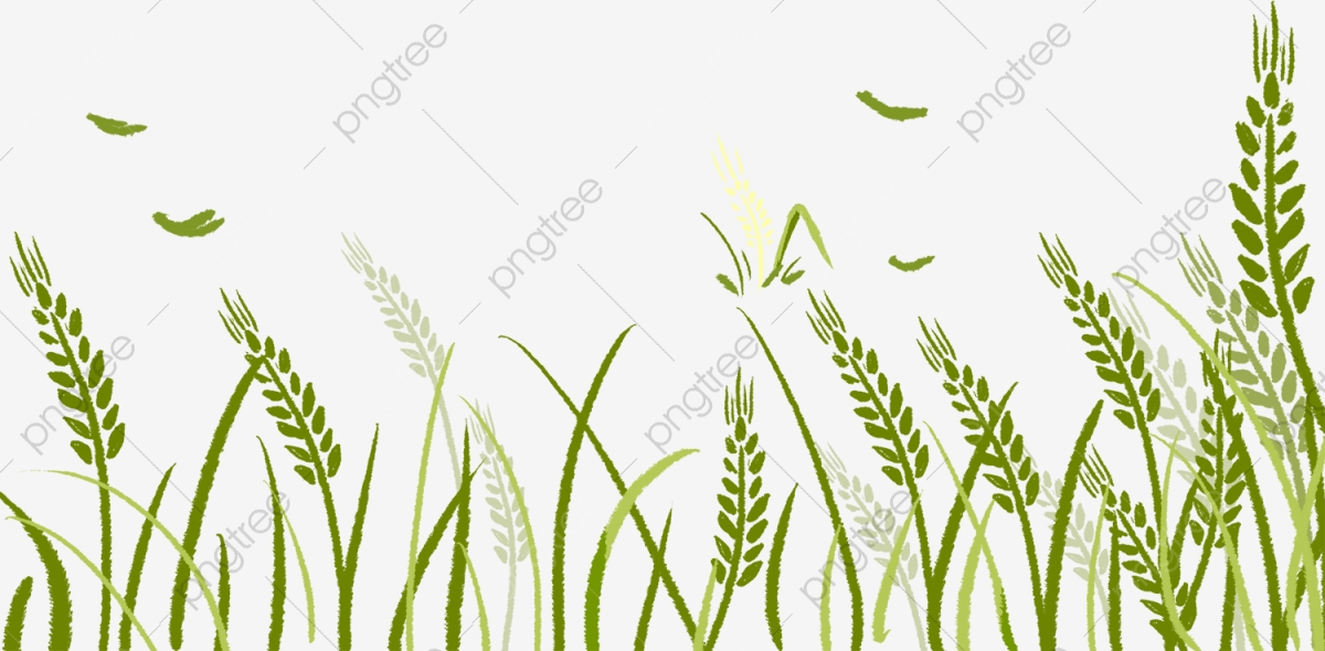 Wheat clipart wheat grass. Download for free png