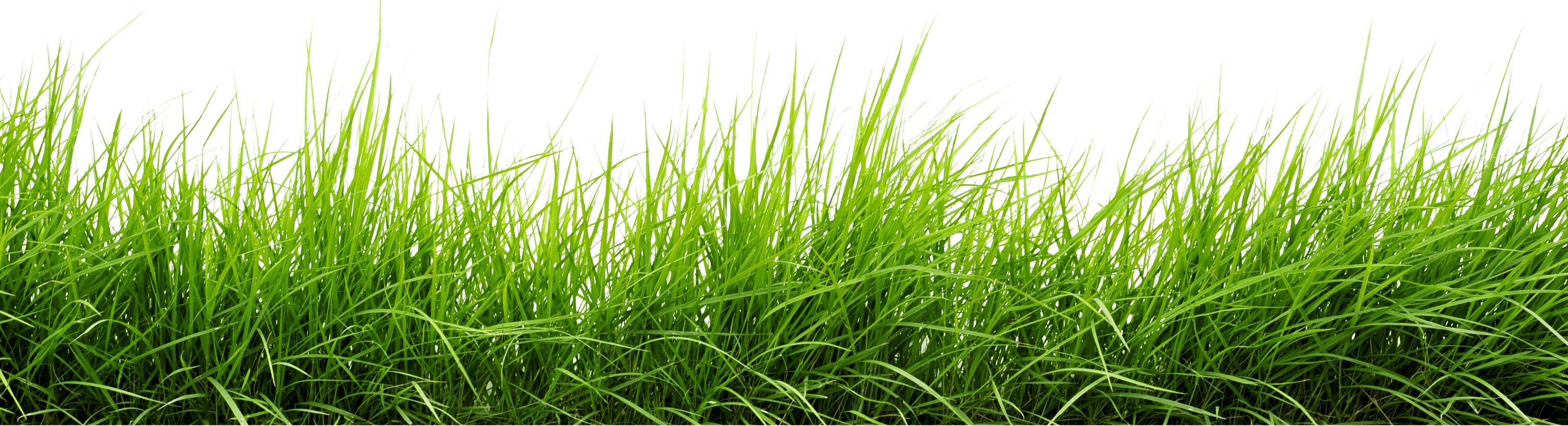 Line of png image. Grass clipart crop