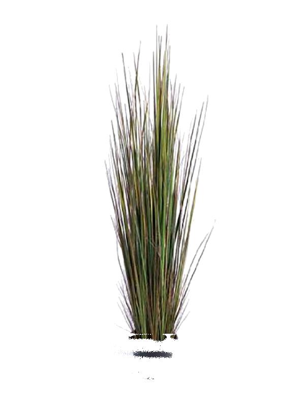 Cutout plant pinterest grasses. Clipart grass cut out