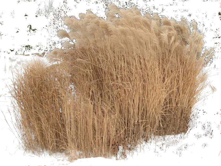 Clipart grass cut out. Cutout plant rendering pinterest