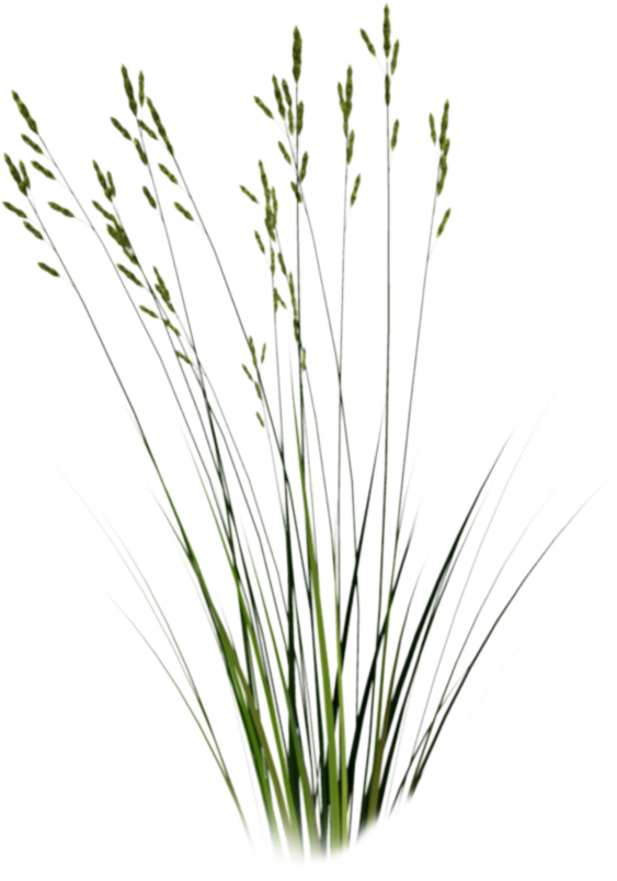 Clipart grass cut out. Png google search texture