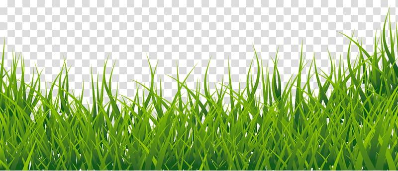 Clipart grass easy. Green english vocabulary border