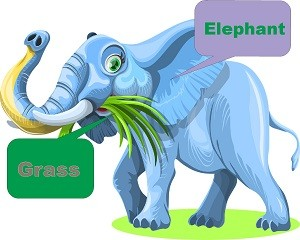 Using for diary cows. Clipart grass elephant grass