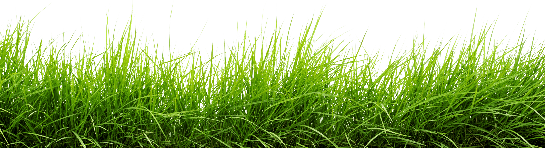 Clipart grass fodder. Line of png image