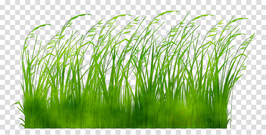 Clipart grass fodder. Green background plant