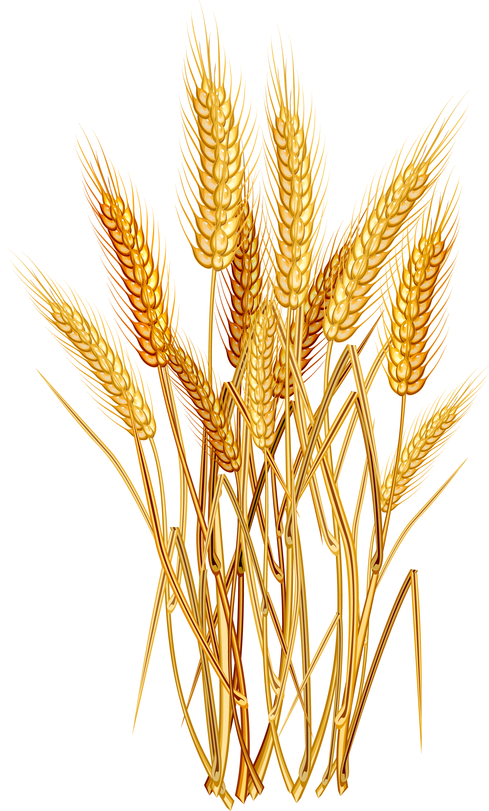 Wheat clipart food grain. Euclidean vector clip art