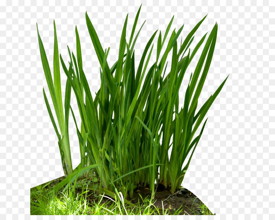 Background plant transparent . Clipart grass food