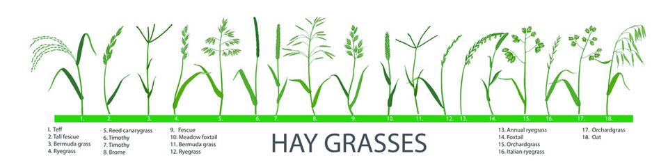 Clipart grass forage. Big set of pasture