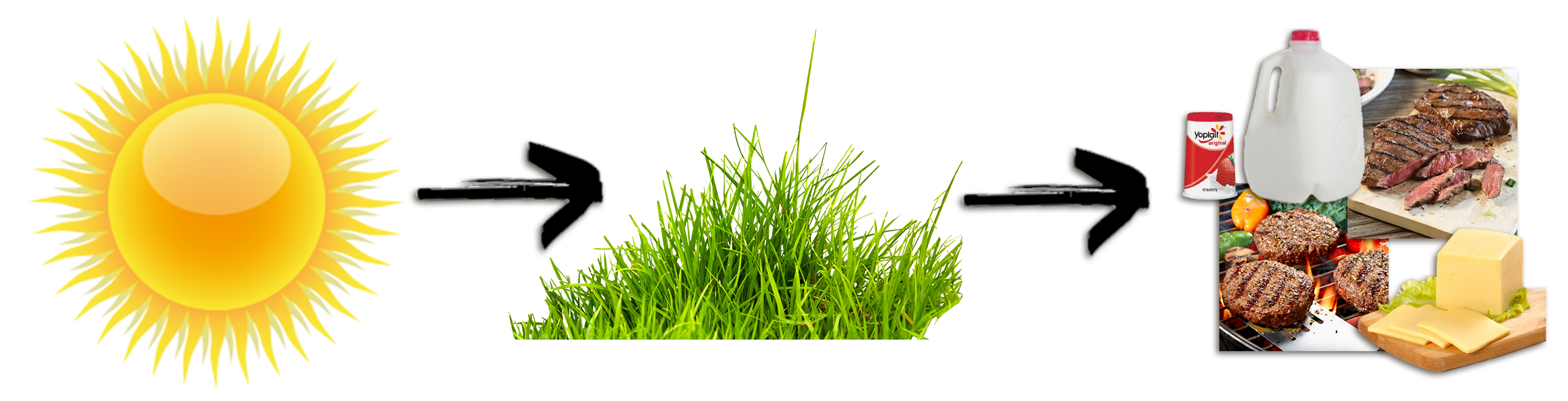 The remarkable ruminant energy. Clipart grass forage