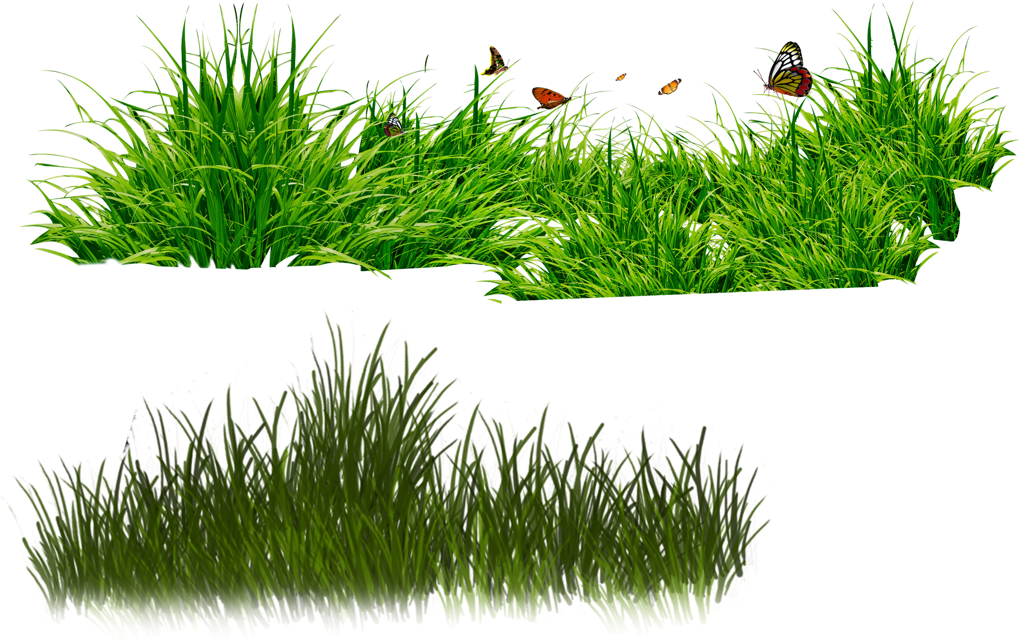Free cliparts download clip. Clipart grass forest grass