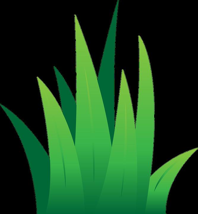 Lawn treatment henderson fertilizing. Clipart grass fungus