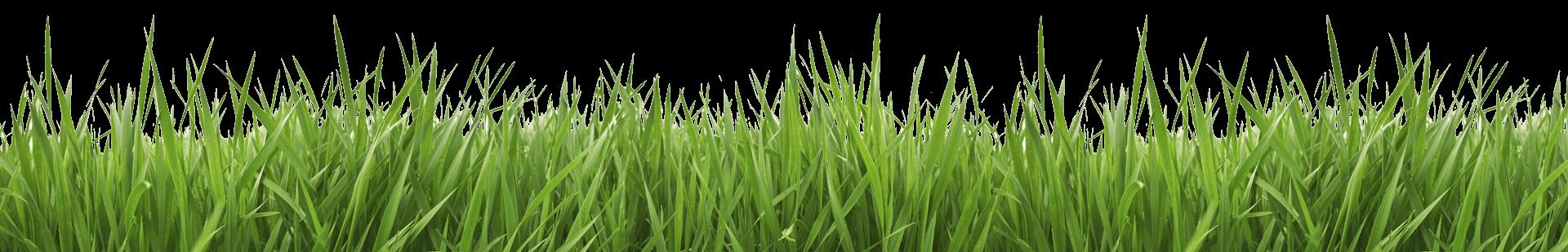 Pro edge lawn care. Clipart grass fungus