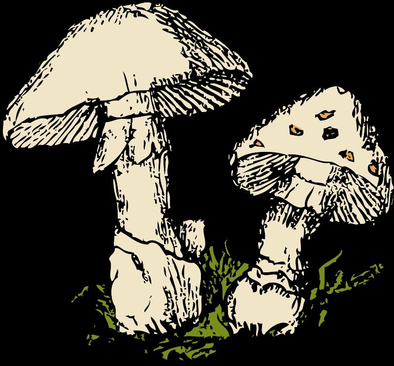 Fungi at getdrawings com. Clipart grass fungus