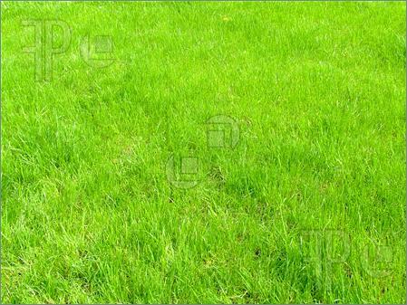 Clipart grass grass field. Free cliparts download clip
