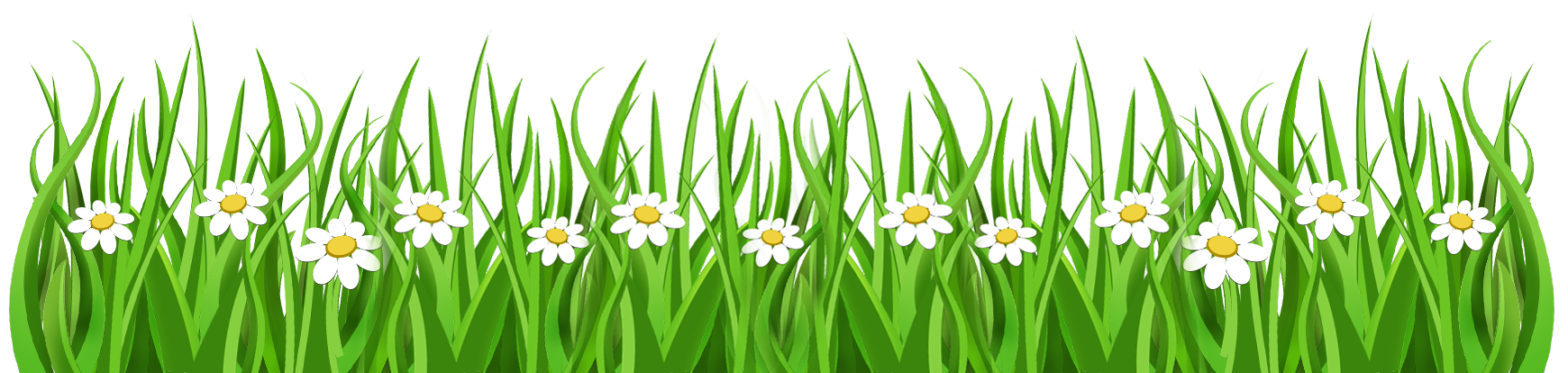 Daisy background pencil and. Clipart grass ground