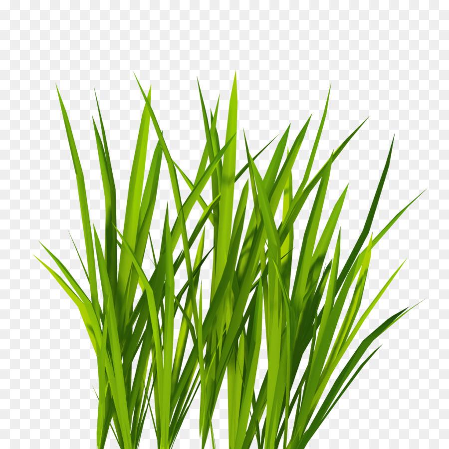 Green background transparent clip. Clipart grass herbs