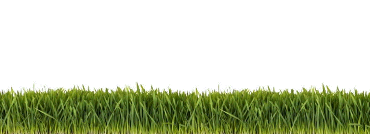 Chinese herb flash cards. Clipart grass herbs