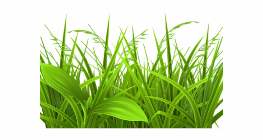 Transparent png download for. Clipart grass herbs
