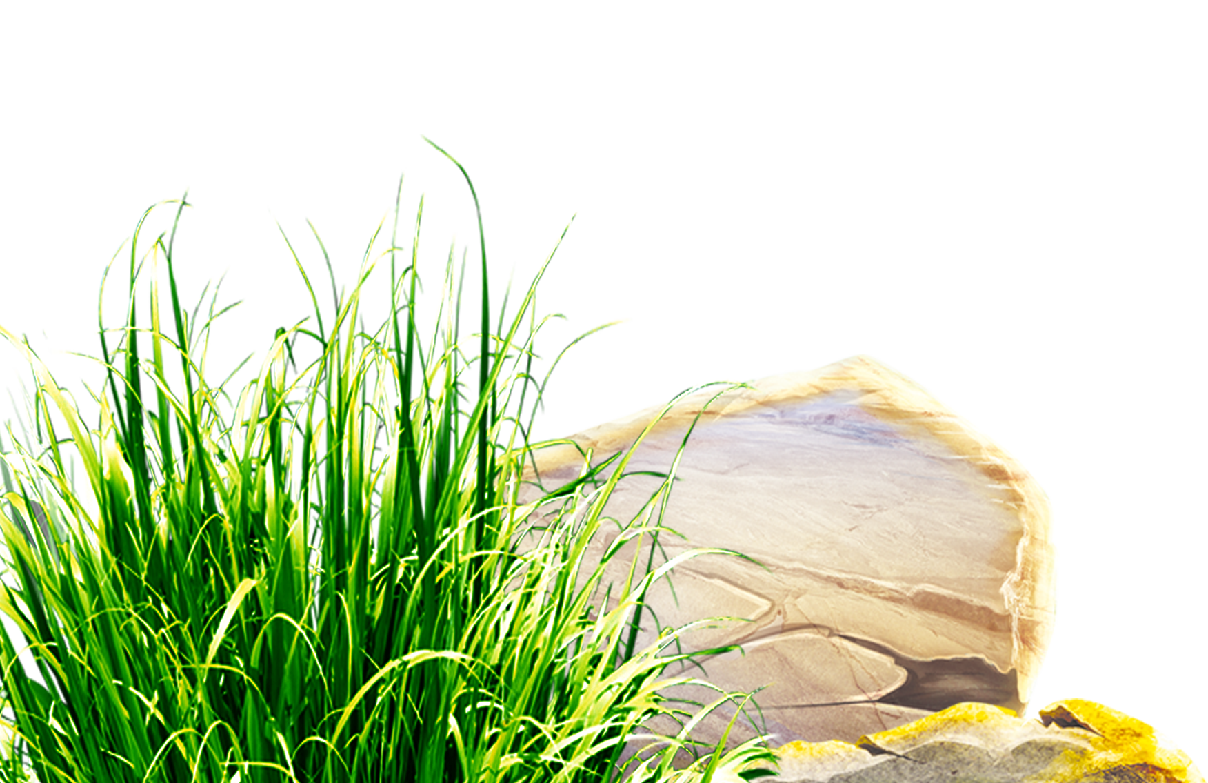 Clipart grass herbs. Download lawn clip art