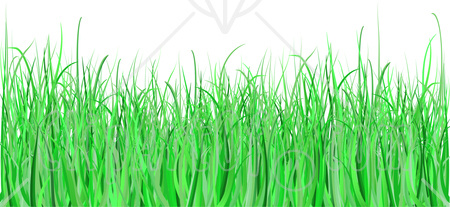 Of a white background. Clipart grass illustration