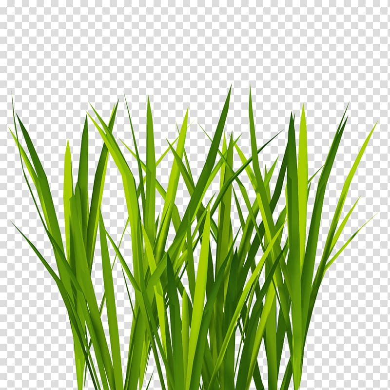 Texture mapping lawn d. Clipart grass illustration