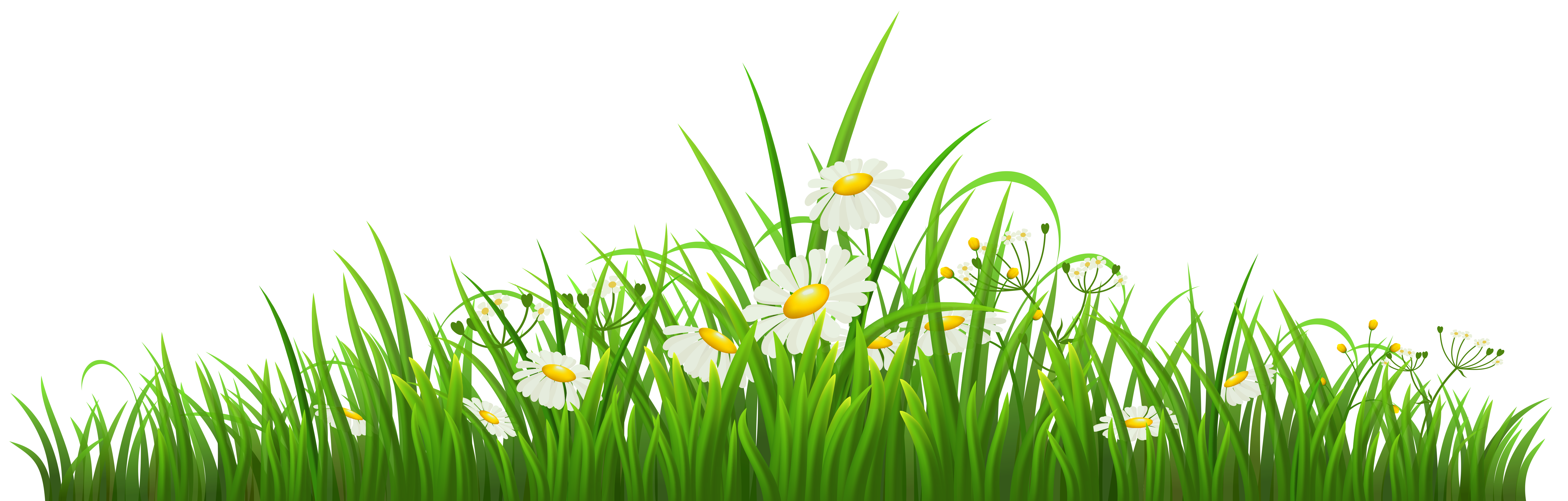 Clipart grass illustration. Transparent with chamomile png