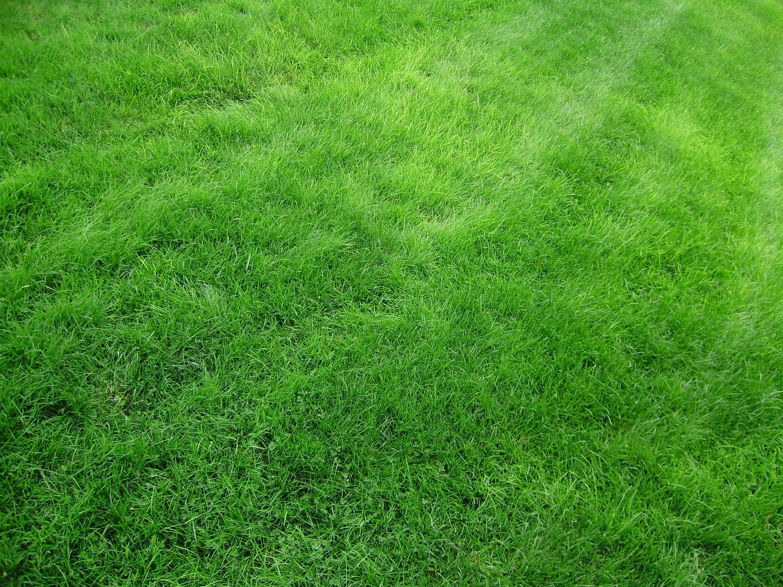 Background gallery yopriceville high. Clipart grass jpeg