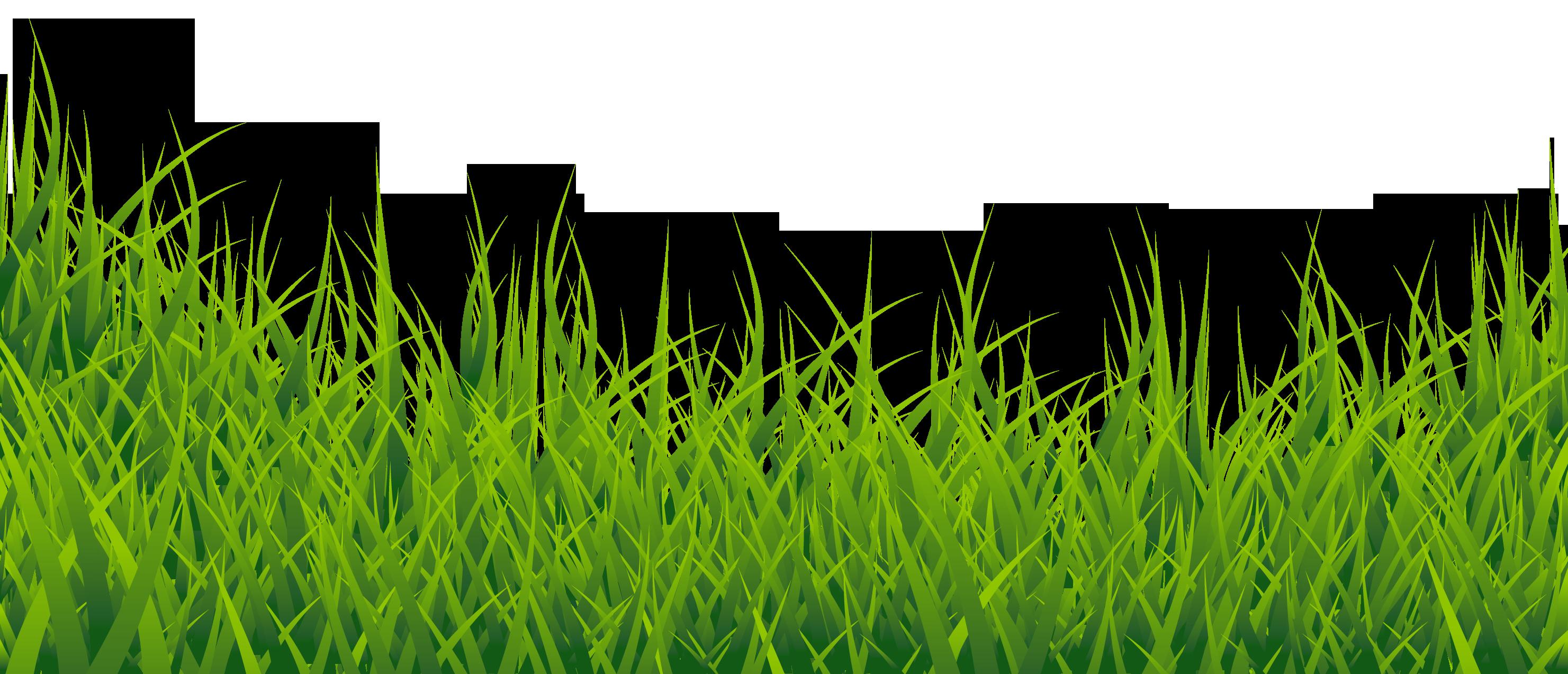 Clipart grass jpeg. Hd png transparent image