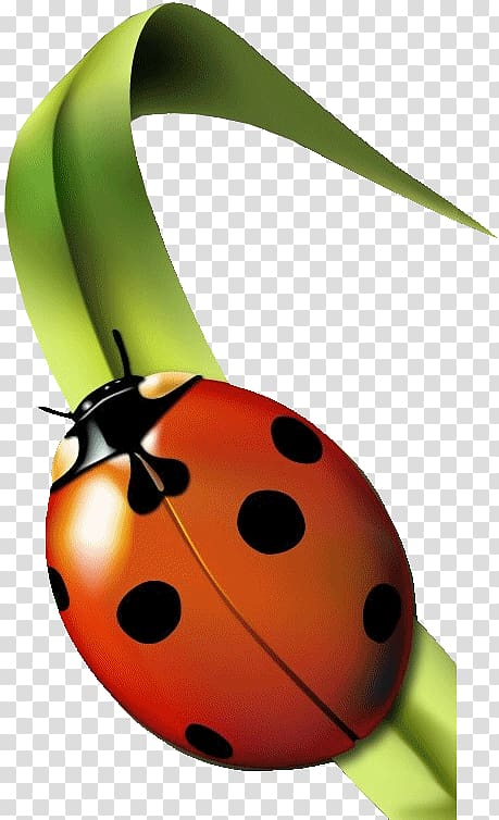 Red on leaf insect. Clipart grass ladybug