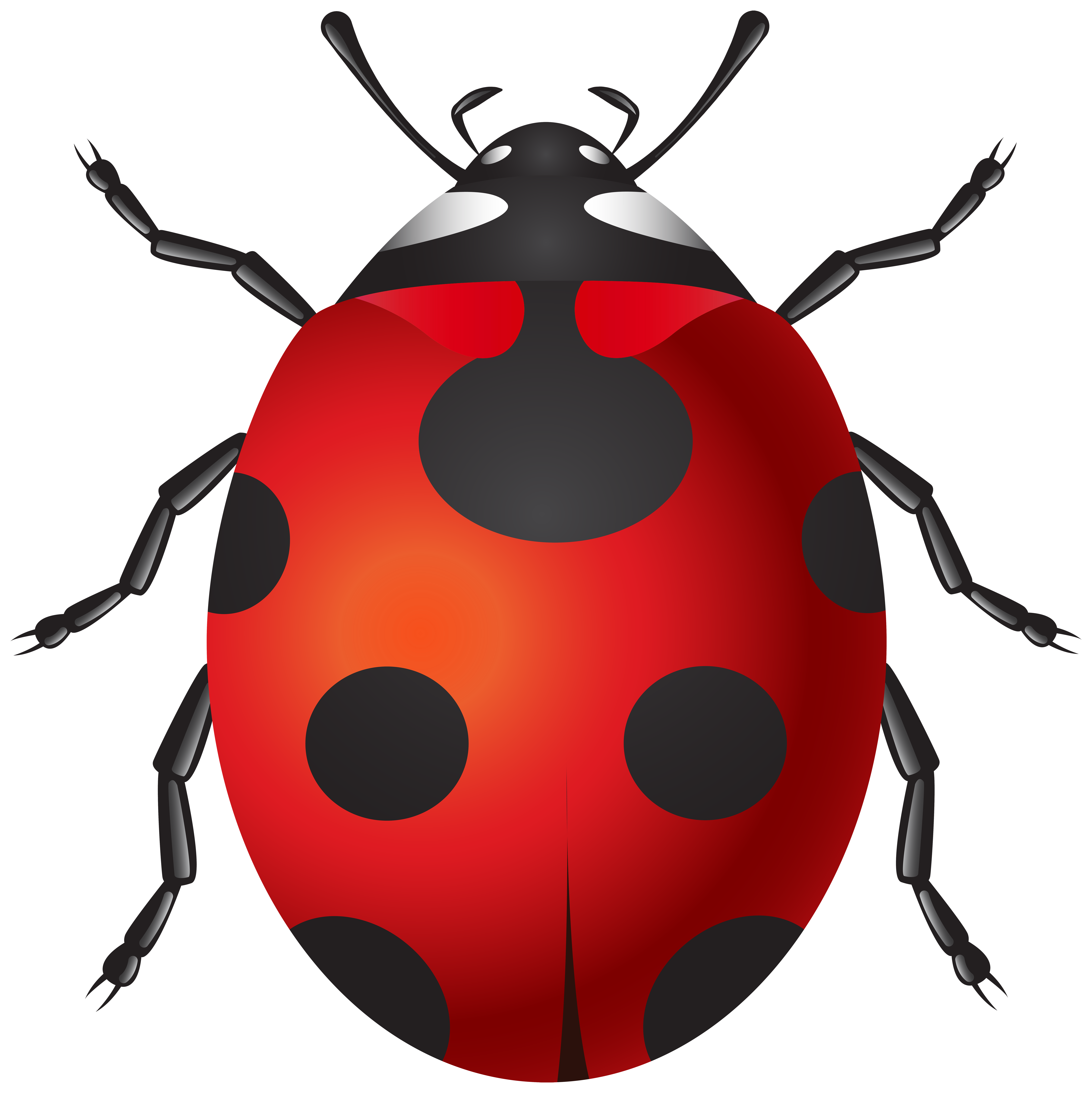 Name clipart insect. Ladybug png clip art