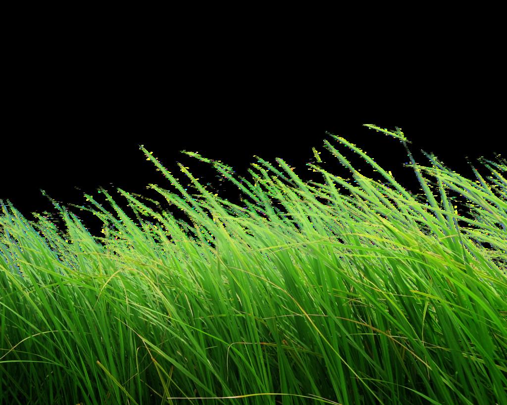 clipart grass light green