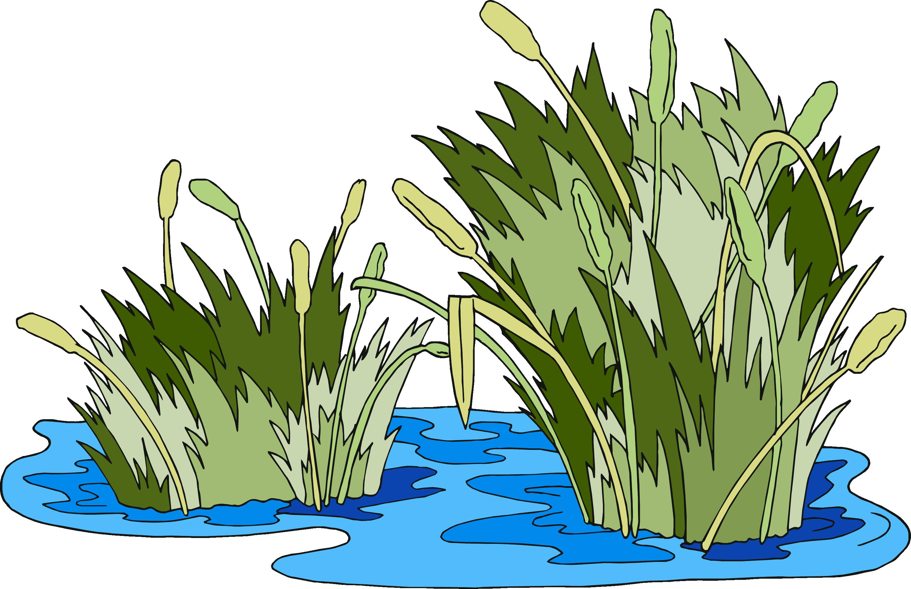 Surviving the jungle vbs. Clipart grass marsh