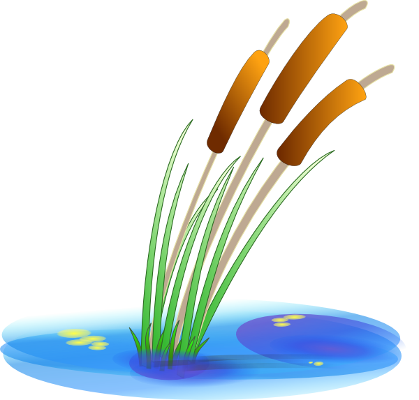 Reed clip art at. Lake clipart garden pond