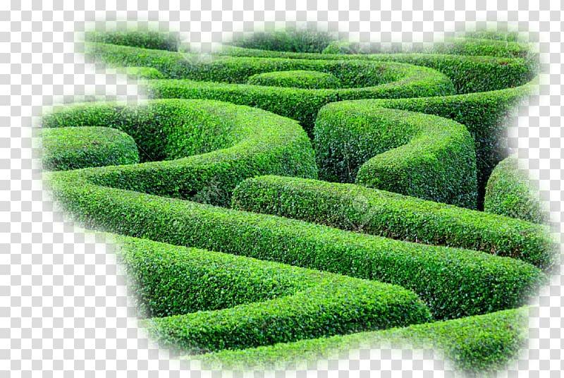 Hedge maze Labyrinth Plant Shrub, labyrinth transparent ...