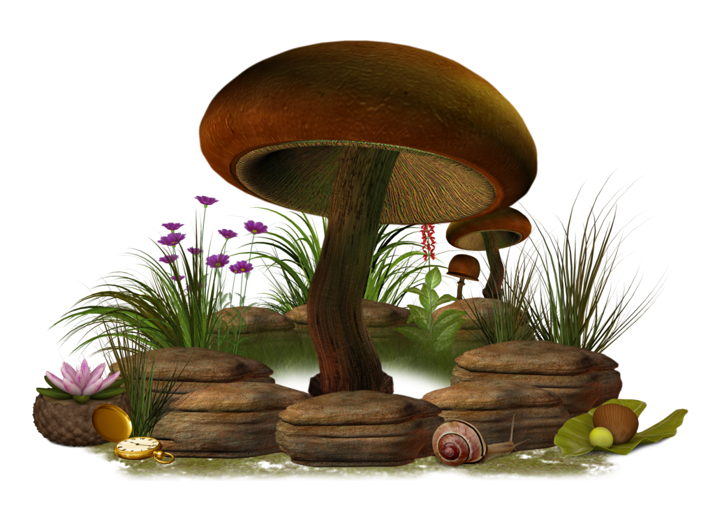Png stock by collect. Clipart grass mushroom