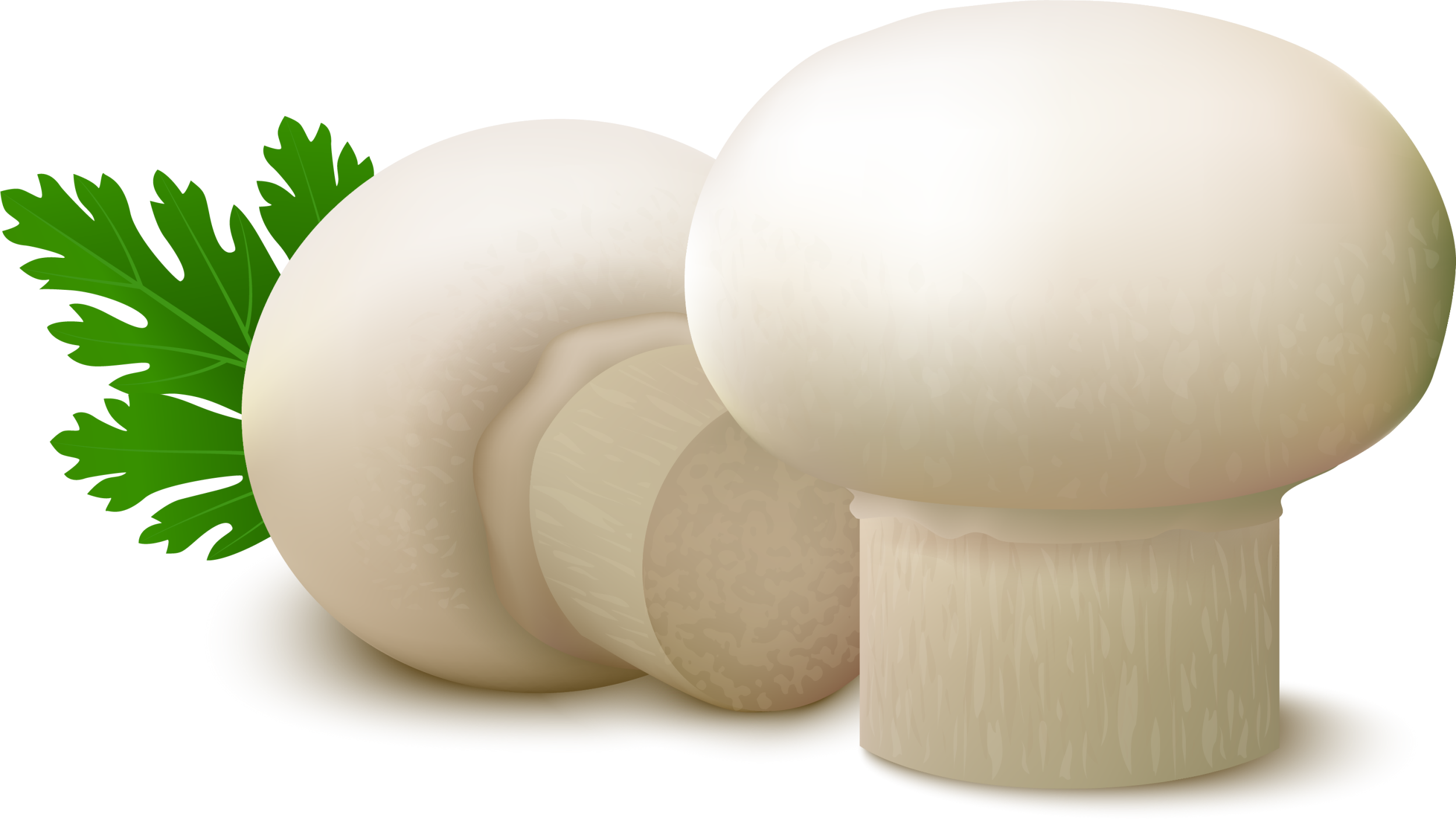 Clipart grass mushroom. Common food fungus white