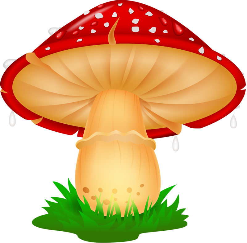 png pinterest clip. Mushrooms clipart kid